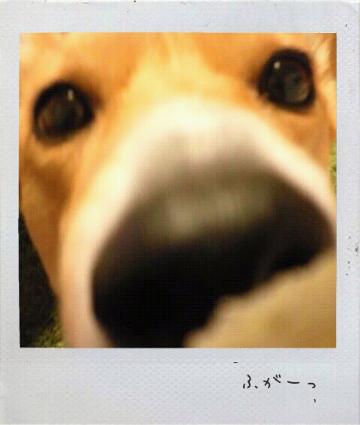 2012124173856_1.jpg