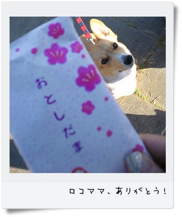 Bdsc_1395_2