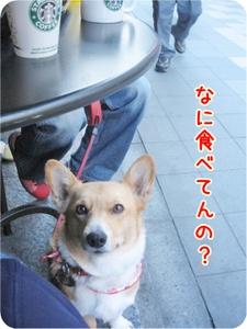 Hatsumoude_sutaba_3