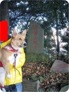 Hatsumoude_tozan