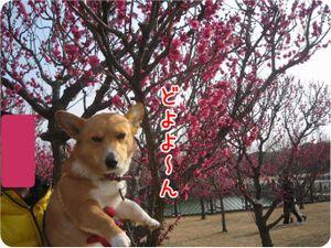 214img_umekiki